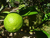 Eterisk Olja Lime 10ml